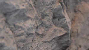 Canyon Taş Panel Uygulama